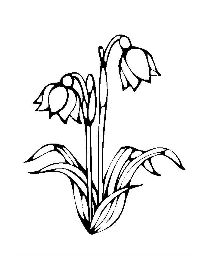 Flower Colouring Pictures 1
