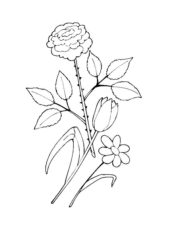Flower Colouring Pictures 12