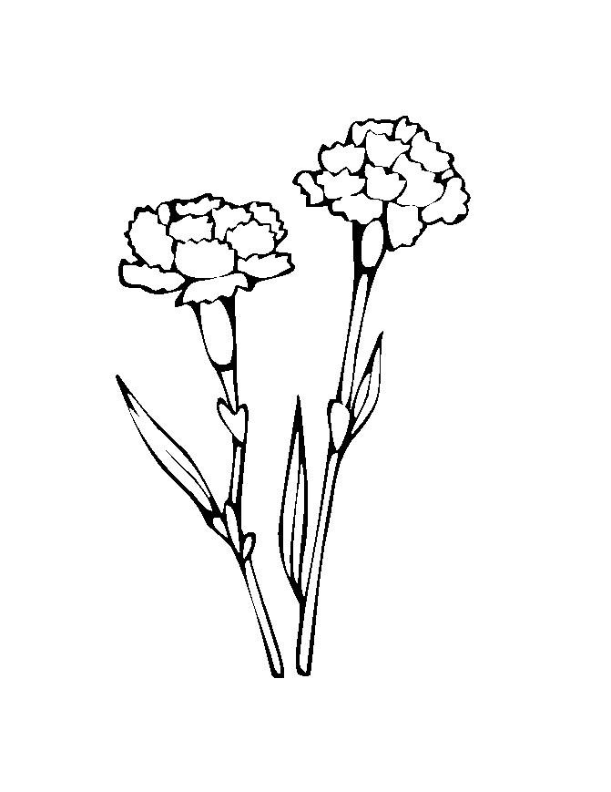 Flower Colouring Pictures 6
